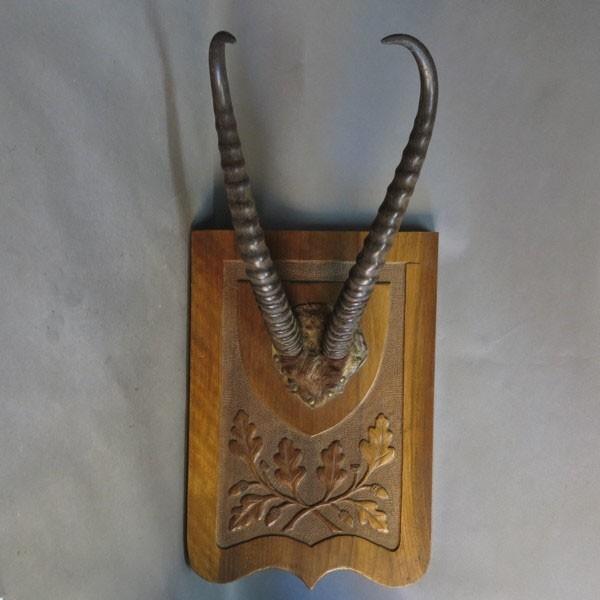 Antiguo trofeo africano de...
